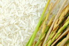 Rice's Grains,Ear Of Rice Back...