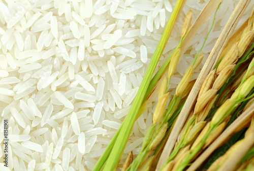 Fotografía Rice's grains,Ear of rice background.