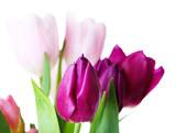 Tulipany na izolowanym tle