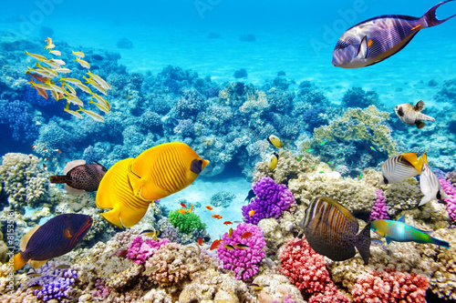Fotobehang Onder water Underwater world with corals and tropical fish.
