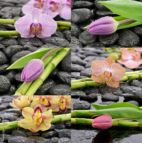 Fototapeta Mokre storczyki z tulipanami obraz