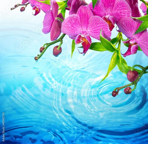purpurowa-orchidea-na-pluskoczacej-blekitne-wody-swiezosci-pojecie