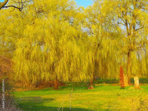 Cadres-photo bureau Miel Weiden im Frühling