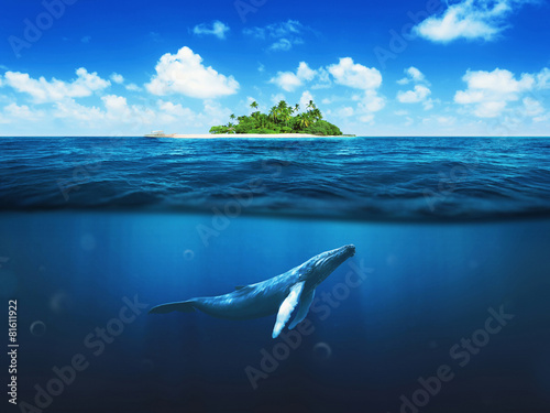 Poster Waterlelies Beautiful island with palm trees. Whale underwater