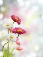 Naklejka Na lodówkę Spring Flowers
