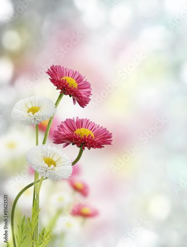 Foto-Schiebegardine ohne Schienensystem - Spring Flowers (von SunnyS)