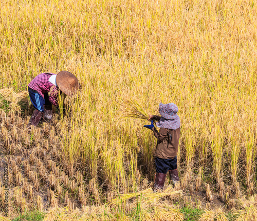 Foto op Canvas Jacht Thai farmer and paddy field in Mae Hong Son province, Thailand