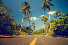 Nice Asfalt Road With Palm Trees