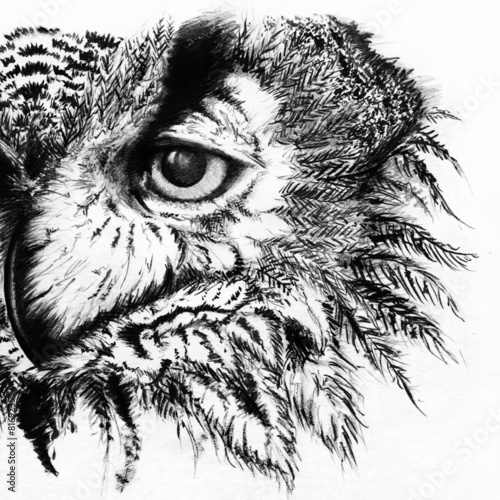 Photo Stands Hand drawn Sketch of animals Owl monochrome black and white sketch
