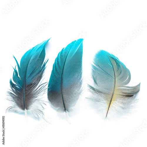 bird feathers ioslated