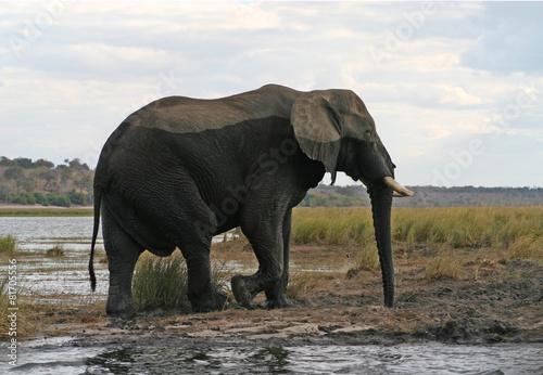 Staande foto Afrika Elephant in the river