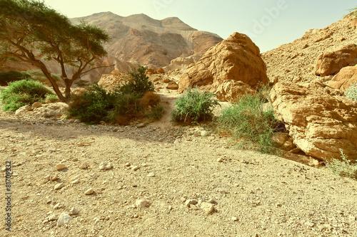 Fotografie, Obraz  Canyon