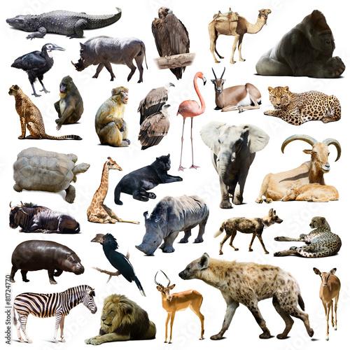 Fotobehang Leeuw hyena, gorilla and other African animals