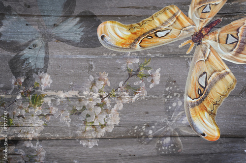 Montage in der Fensternische Schmetterlinge im Grunge white flowers grunge