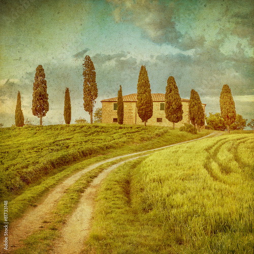 Poster Olive vintage tuscan landscape