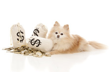 Expensive Pet