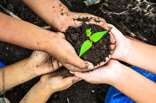 Foto  child holding young plant in hands . Ecology concept
