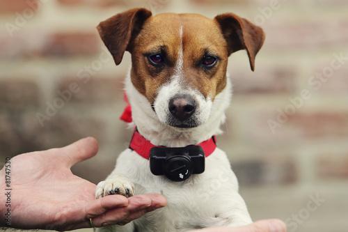 Foto  Hund mit Anti-Fugue-Kragen