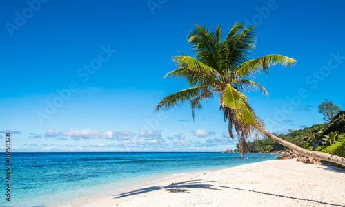 Wall Murals Blue Coconut palm tree on tropical beach, Seychelles