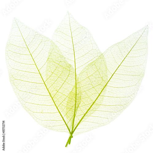 Poster Squelette décoratif de lame feuilles décoratives sur fond blanc