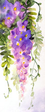 Watercolor Background. Violet Wisteria In Blossom