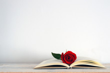 An Open Book With A Red Rose Flower On It. White Background