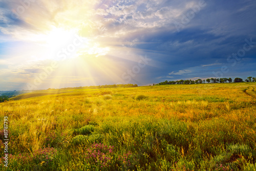 Canvas Prints Honey Green field at sunset