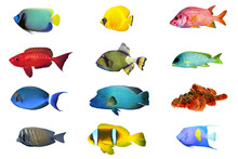 Fish Species -  Index Of Red Sea Fish Isolated On White
