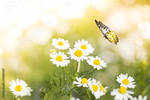 In de dag Bloemen Beautiful Flowers With Butterfly