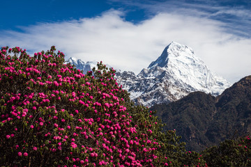 FototapetaPanorama of the Himalayas in Nepal spring