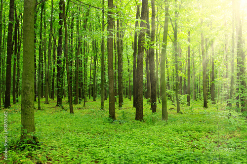 Recess Fitting Forest sunlight forest