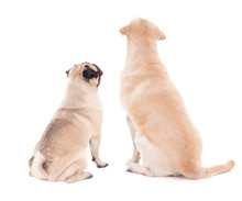 Friendship Concept - Back View Of Two Sitting Dogs Isolated On W