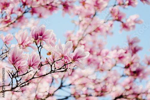 Plakat magnolia