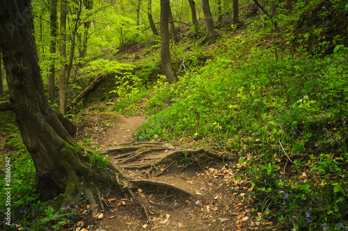 Tuinposter Weg in bos Roots and footpath on the forest