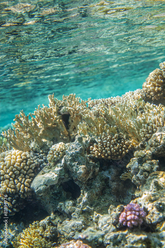 Red sea coral reef - 81894776