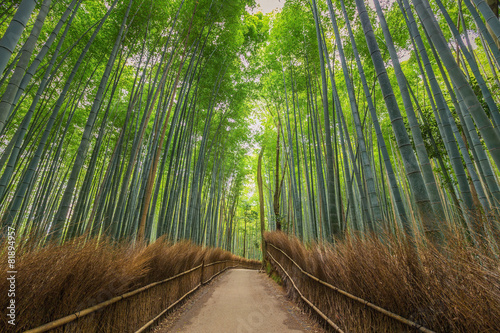 Foto op Canvas Bamboo Bamboo Forest in Kyoto, Japan