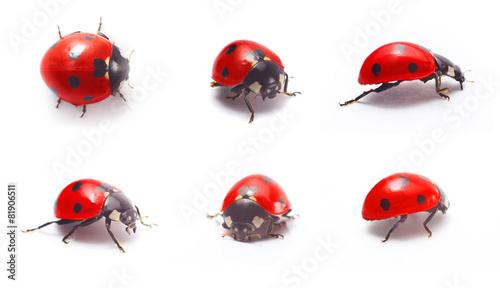 Valokuvatapetti ladybug isolated