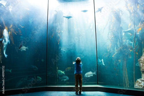 Fotografering  Young man looking at penguins in a tank