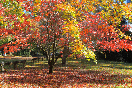 Cadres-photo bureau Marron Autumn Colours