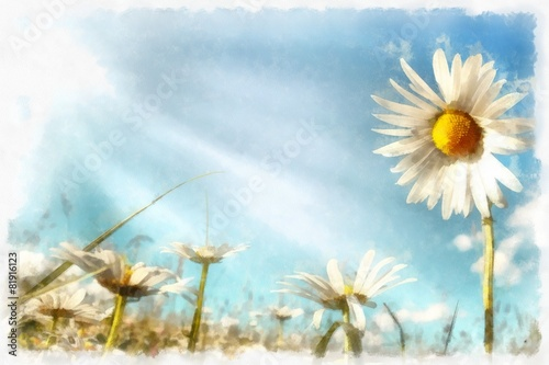 Photo  spring daisy flower field vintage