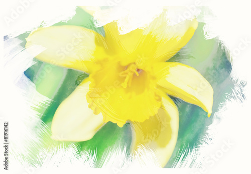 spring daffodils in garden, vintage watercolor effect Poster