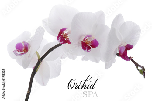 Orchid flower on a white background - 81918325