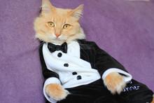 Cat Wearing Tuxedo
