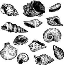 Set Of Line Drawning Shells
