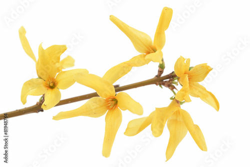 Obraz na płótnie spring flower