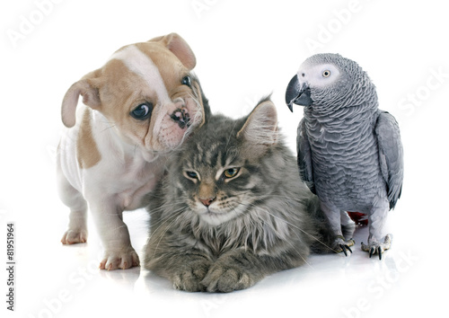 Photo  parrot, puppy and cat