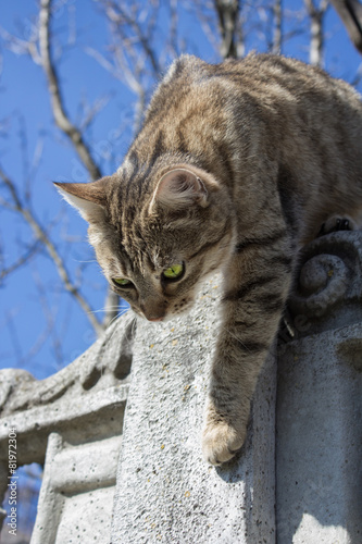 Spoed Foto op Canvas Canada cat climbs on the fence