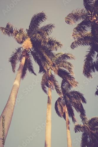 coconut palm tree Wall mural