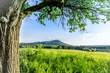 Drzewo i góra