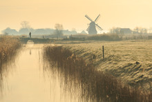 Walking The Dog In The Dutch C...